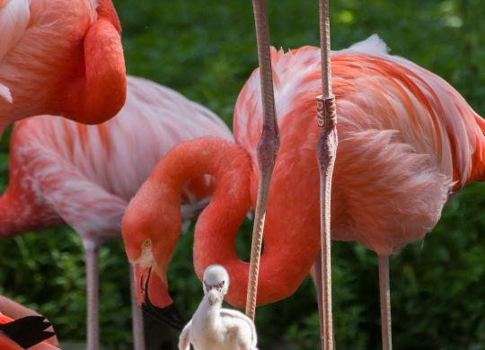 Flamingo_Zoo