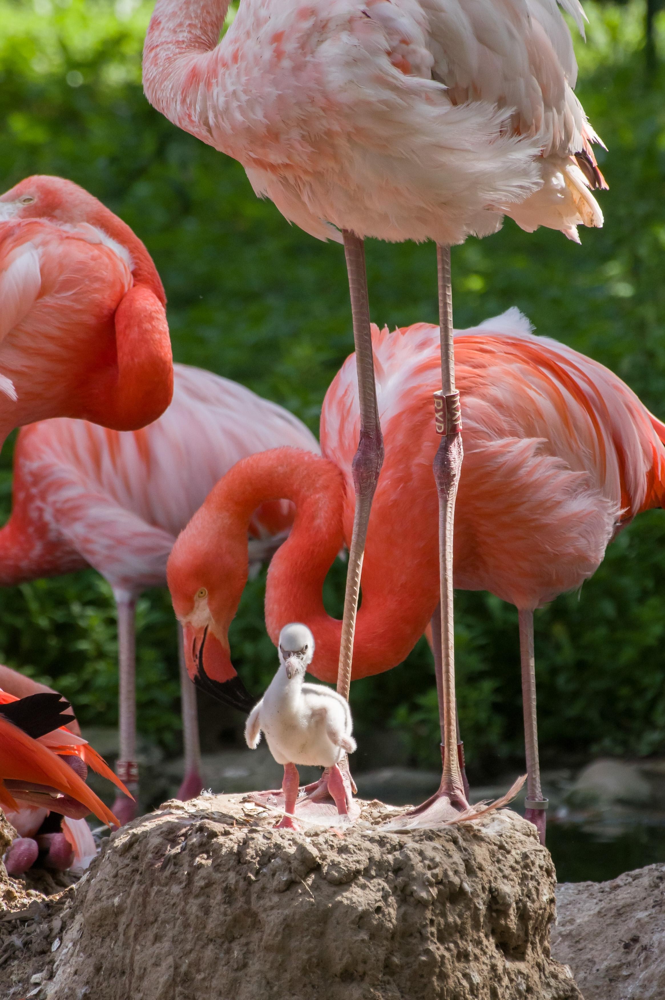 Flamingo_Zoo