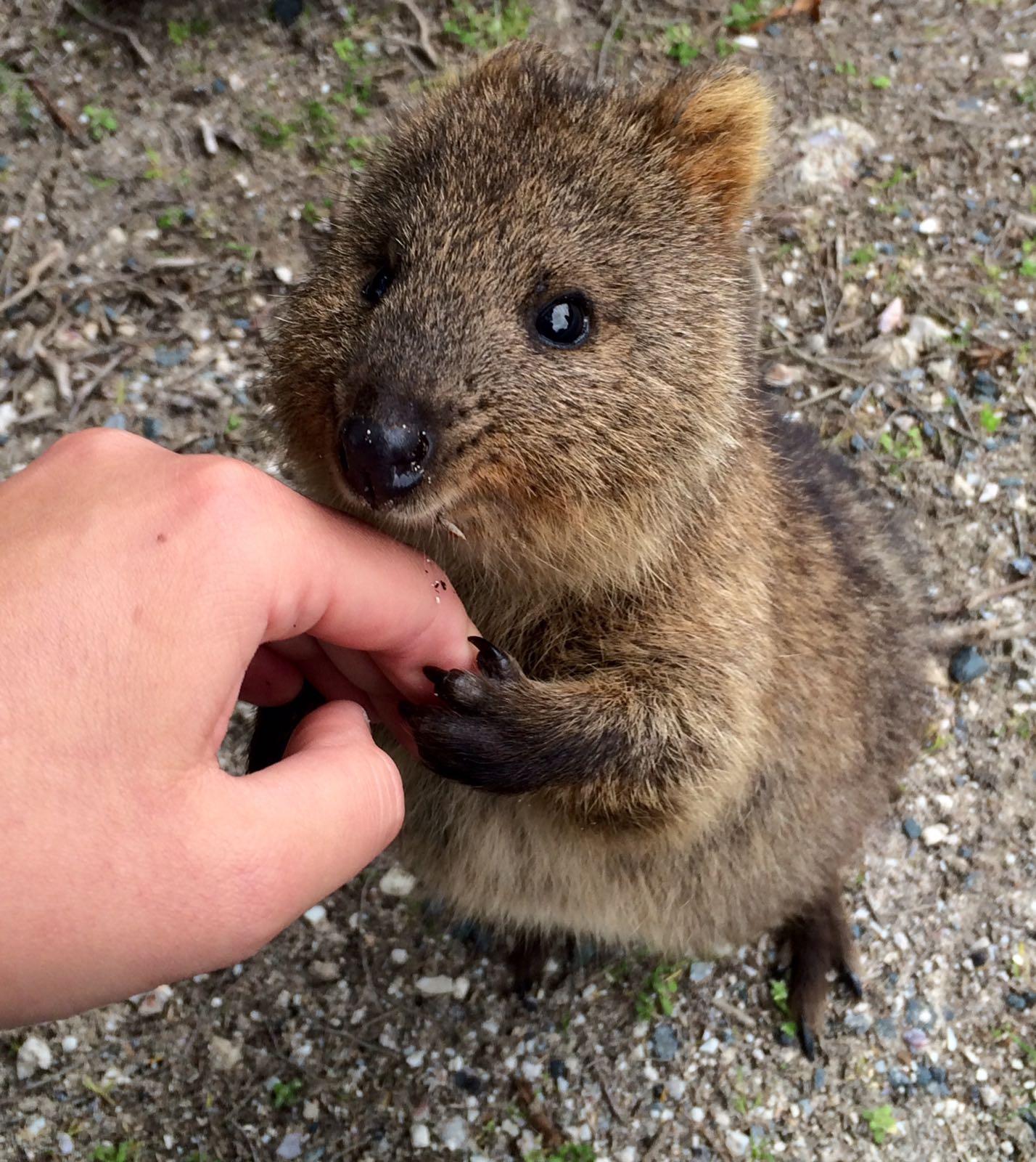 Gastblog_Australien