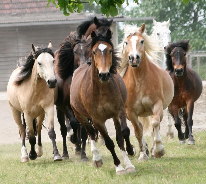 SLK_Kinderparty_Pony