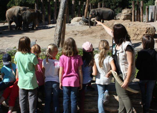 SLK_Weinheim_Heidelberg_Zoo-Unterricht_Elefanten