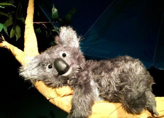 Koalabaer und Freunde_D1